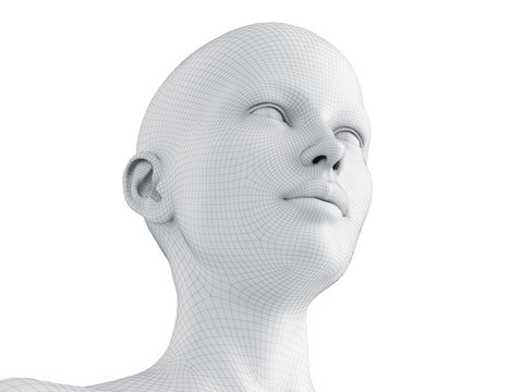 3d rendered medically accurate illustration of a female wireframe head