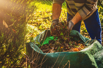 Cleaning in the garden. The concept of care for cleanliness and order in the garden. The man cleans the leaves, old branches throwing them into the bag. Sweeping dust and leaves.