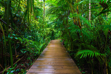 Fototapeten Straße im Wald Wooden pathway in deep green mangrove forest
