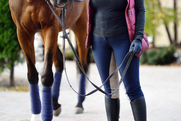 Woman rider takes his horse for training at the equestrian club