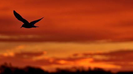 Hawks & Birds in Prince Edward Island, Canada