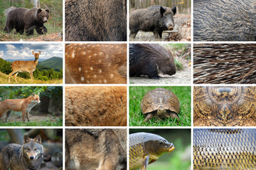 Fototapete - Collection of eight animals and their true skin textures