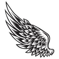 Wings Bird Black & White  Vector Illustrator 011