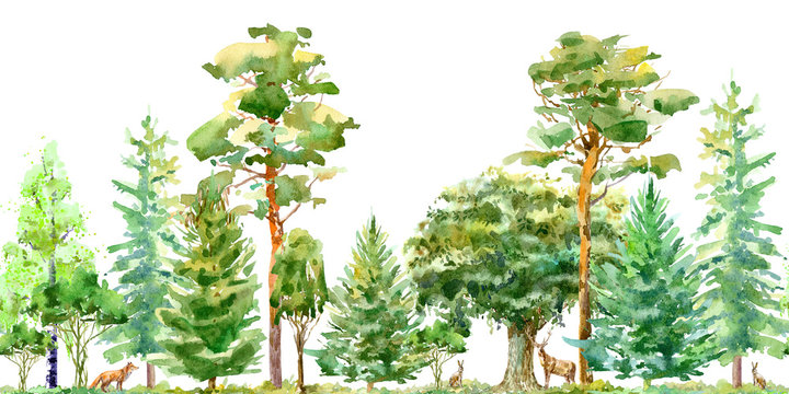 Seamless border of a fox,hare, deer, oak,birch,pine,spruce.Forest animals.Deciduous and conifers tree.Watercolor hand drawn illustration.White background.