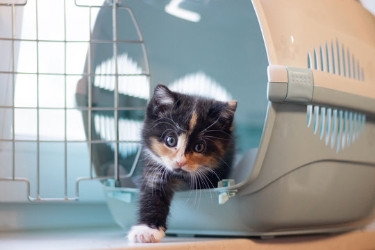 The cat sits in a carrier for animals . A pet. Transportation of animals. Little kitten.