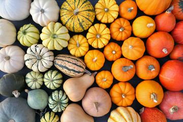 Colorful pumpkins and squashes collection. Autumn background. Papier Peint