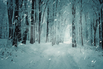 snowy road in winter forest during blizzard