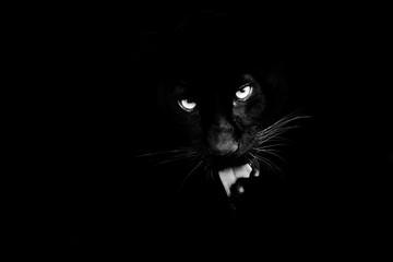 Photo sur Aluminium Panthère Black panther with a black background