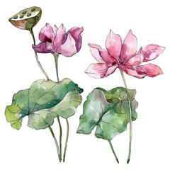 Lotus floral botanical flowers. Watercolor background illustration set. Isolated lotus illustration element.