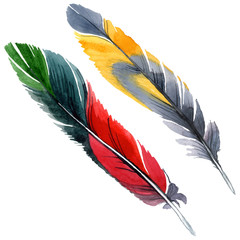 Colorful bird feather from wing isolated. Watercolor background illustration set. Isolated feather illustration element.