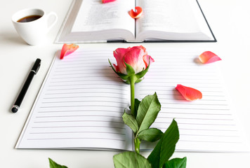 Bible flat lay with red/pink rose, pedals, open journal and open book on white background