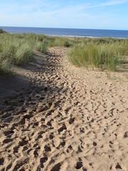 Dune path to beach in Devon