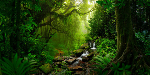 Foto op Canvas Bamboo Southeast Asian rainforest with deep jungle