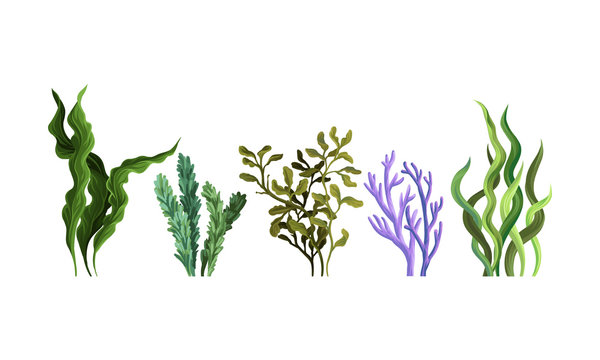 Set of green algae. Vector illustration on a white background.