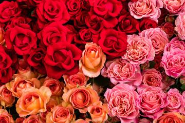 Rosen in verschiedenen Rottönen