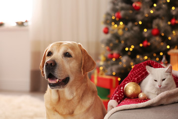 Adorable dog and cat together at room decorated for Christmas. Cute pets
