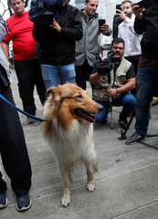 Journalists take pictures of Dylan, the dog of Argentina's President-elect Alberto Fernandez, outside Fernandez home, in Buenos Aires