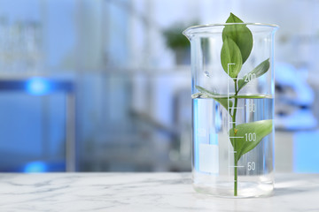 Fototapete - Beaker with plant on table in laboratory. Space for text