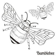Illustration with flies bumblebee for your design.