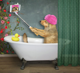 The beige dog with a pink towel around its head makes a selfie in the bath painted flowers in the bathroom.