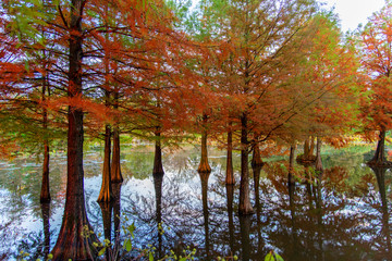 beautiful autumn trees and gardens by the lake