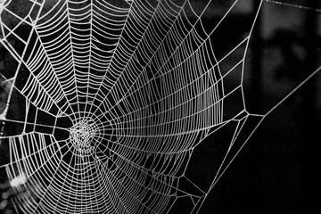 Halloween theme, dew drops on a white spider web with a dark background