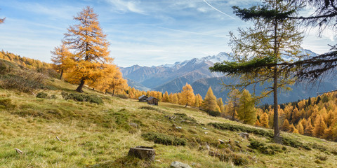 Fototapete - herrliche herbstliche Landschaft in Tirol Österreich als Panorama