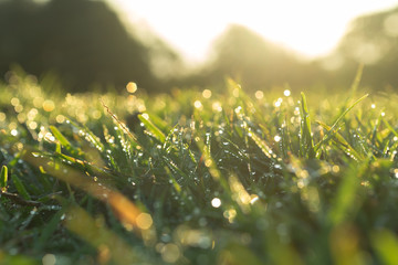 waterdrop on grass and sunlight