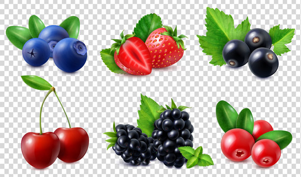 Realistic Berries Set