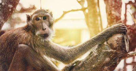 Close up portrait Alone monkey sitting on the tree and Wait for hope with orange leak light