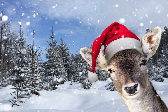 Junges Rentier im Schnee mit Nikolausmütze