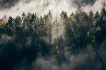 Der Teutoburger Wald im Nebel Fototapete