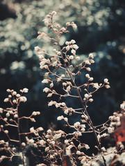 White plant in the garden