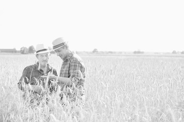 Black and white photo of mature farmer showing wheat grains to senior farmer in field