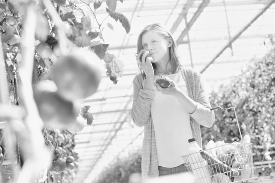 Black and white photo of Woman buying and smelling tomato in greenhouse