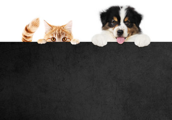Fotomurales - puppy dog and cat pets together showing a black placard isolated on white background blank template and copy space, black friday concept