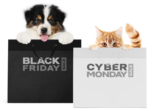 puppy dog and cat pets together showing  black and silver shopping bags with black friday and cyber monday text isolated on white background blank template and copy space