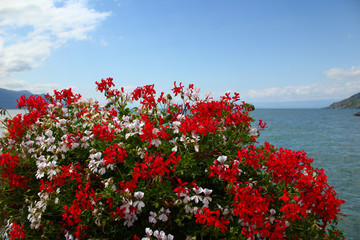 Lake Geneva: The characteristic red and white flowers at the marina in Vevey, Switzerland in summertime