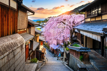 Wall Mural - Cherry blossom in springtime at the historic Higashiyama district, Kyoto in Japan.