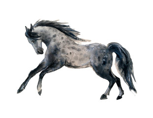 Cute watercolor horses on the white background