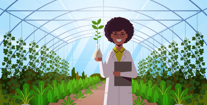 african american woman scientist examining plant sample in test tube modern glass greenhouse interior research science agriculture farming concept flat horizontal portrait vector illustration