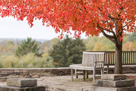 Bench and red tree
