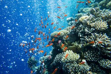 Spoed Foto op Canvas Koraalriffen Underwater world panorama. Coral reef ocean light under water