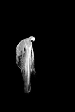 Scary ghost isolated on black background.