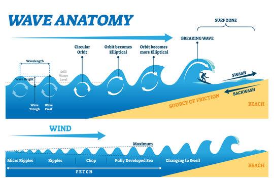 Wave anatomy vector illustration. Water movement physics explanation scheme