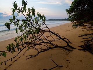 arbre penché sur une plage tropicale au lever de soleil
