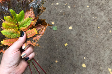 Hand holds the autumn leaves, close-up. Space for text