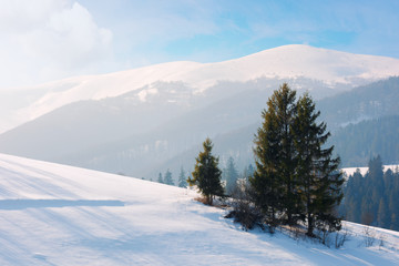 spruce tree on the snow covered slope.  beautiful mountain landscape in winter. misty afternoon weather, blue sky with clouds