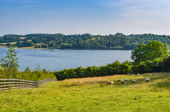 Rutland Water a large reservoir in Leicestershire. With blue sky, green grass and trees.