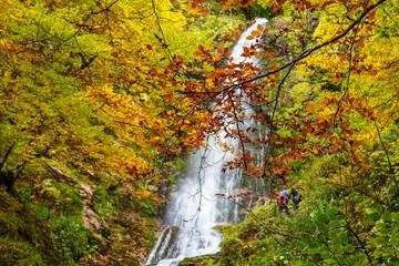 Ramas de haya con hojas de color ocre en otoño con la Cascada del Xiblu al fondo. Hayedo de Montegrande. Ruta de senderismo. Cordillera Cantábrica, Asturias, España.
